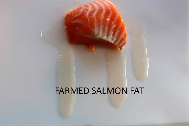fatty farmed salmon