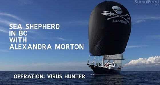 Sea Shepherd: operation virus hunter