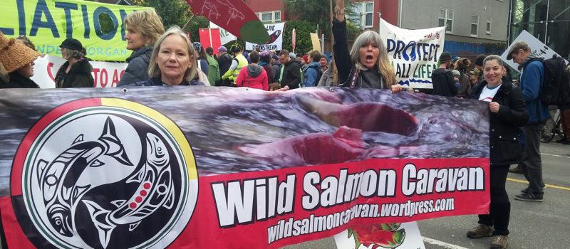 wild salmon caravan - dawn morrison